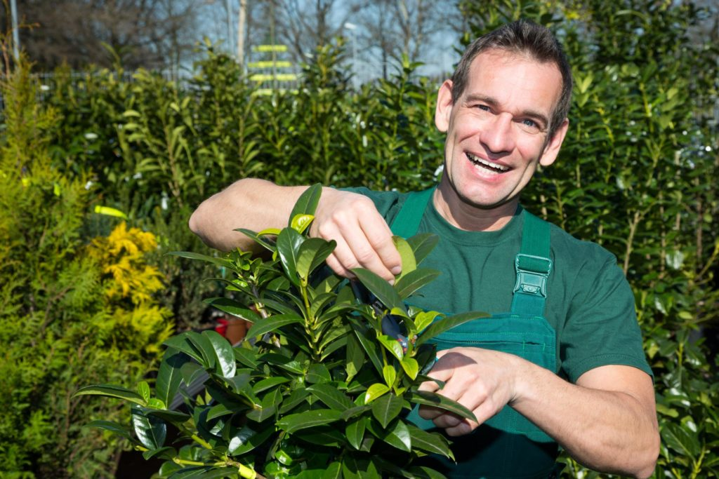 Jordan UT Tree Service - About