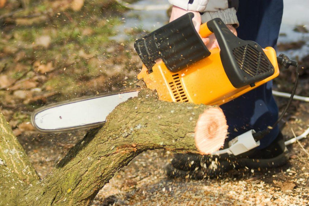 Jordan UT Tree Service - Tree Removal Service