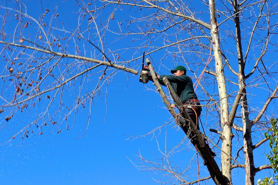 picture in west jordan of tree service by south jordan tree care