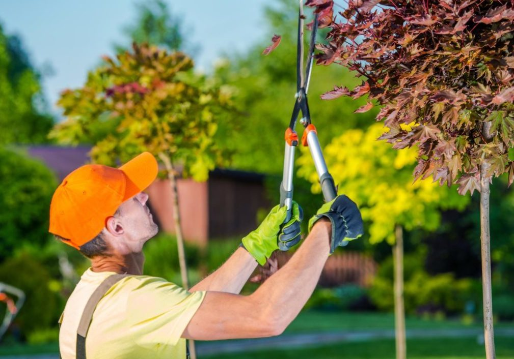 this image shows jordan ut tree service tree doctor cure poisoned or sick tree