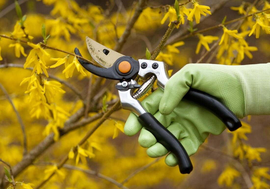 this image shows tree pruning